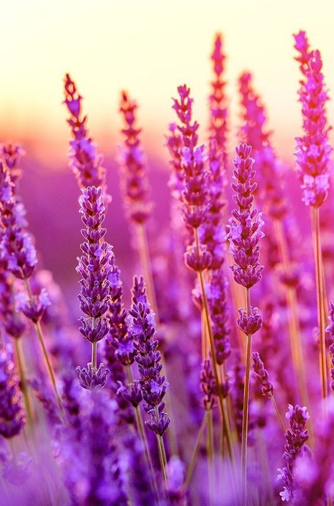 Best Native American Herbal Medicine Books Review
